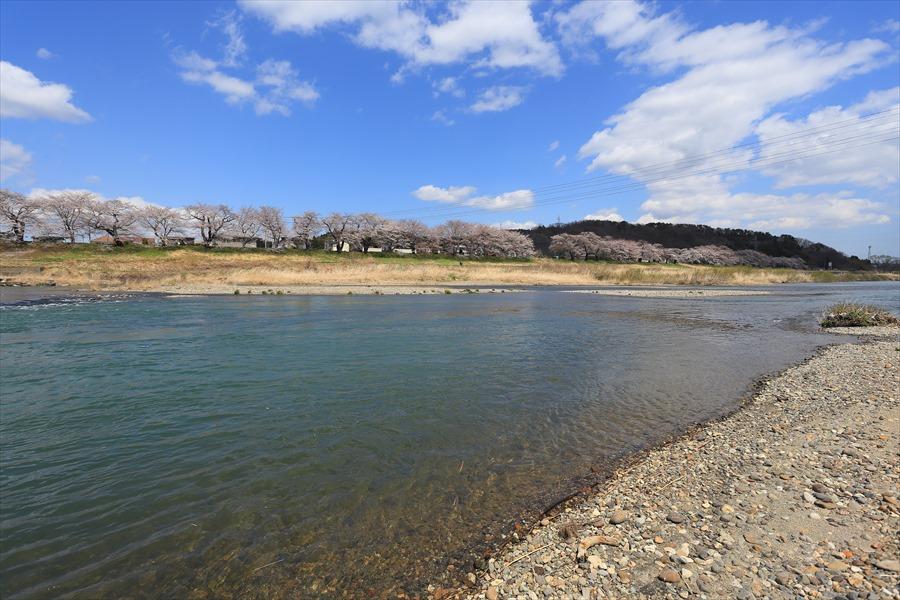 白石川千本桜その2堰川原からのアングル下流08