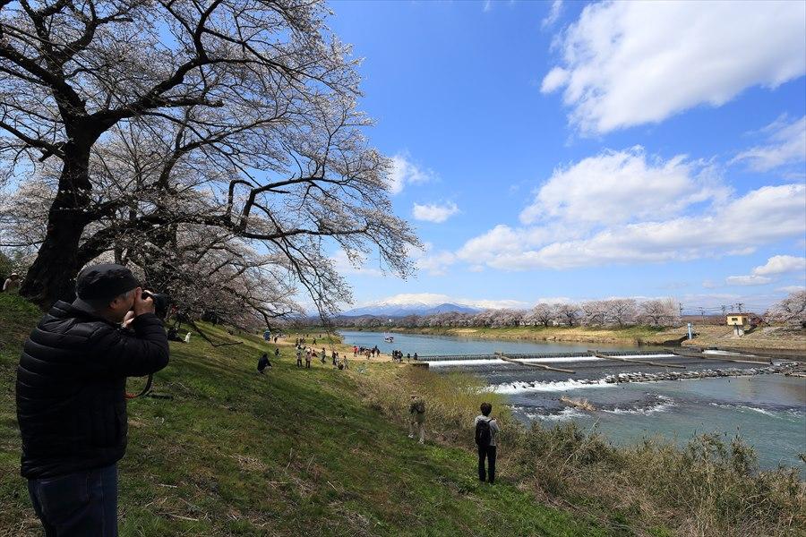 白石川千本桜その2堰の土手と川10