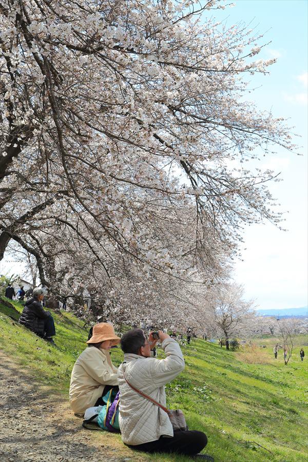 白石川千本桜その1の2人と桜03