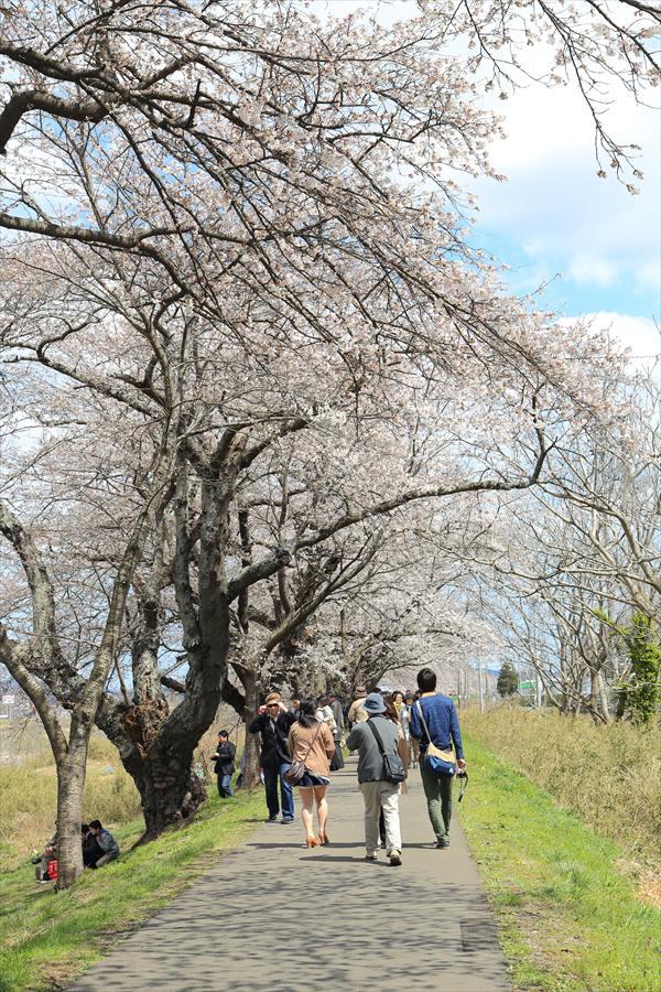白石川千本桜その1の2人と桜06