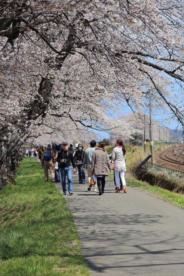 白石川千本桜その1の2女性と桜09
