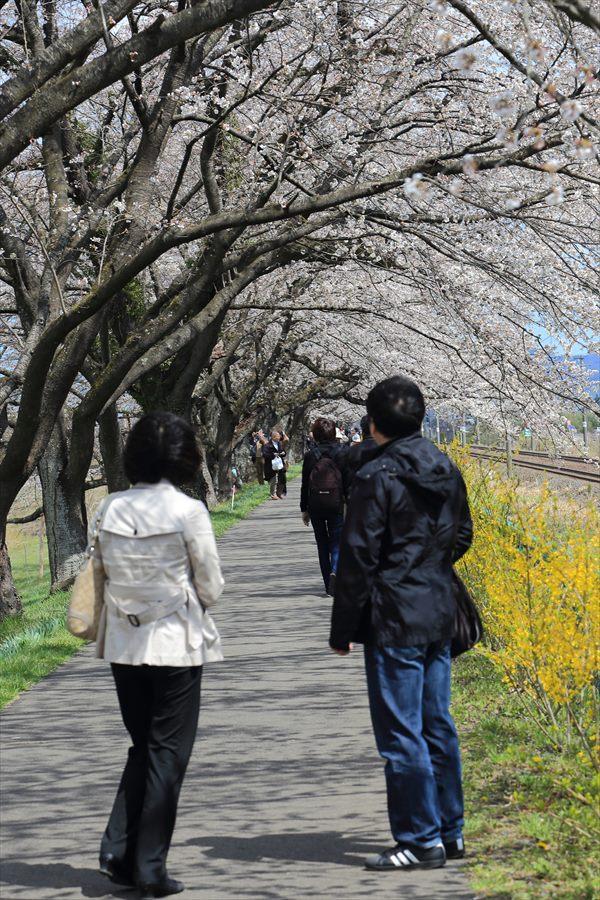 白石川千本桜その1の2夫婦10