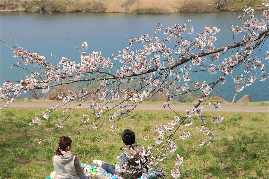 白石川千本桜その1の2カップルの佇まい01