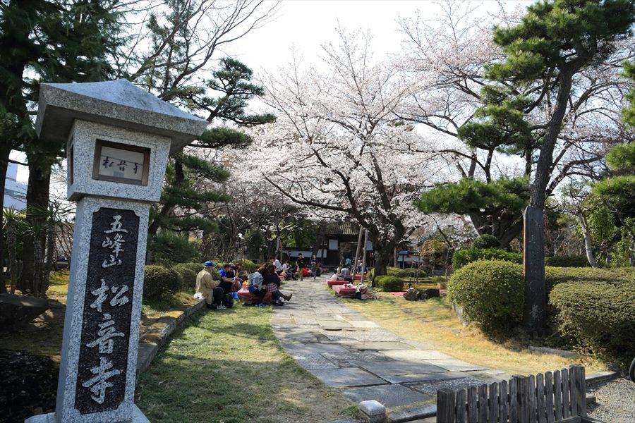 近隣桜宴席01