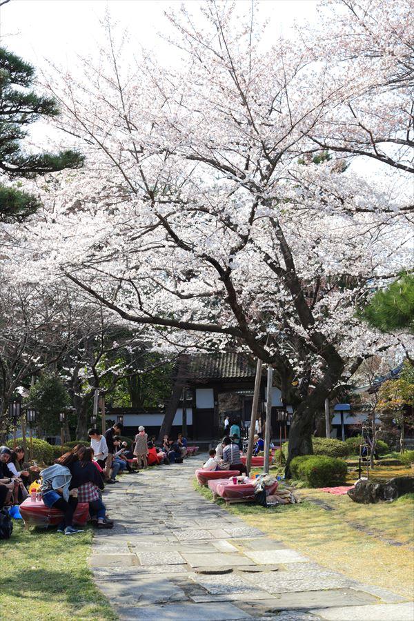近隣桜宴席02