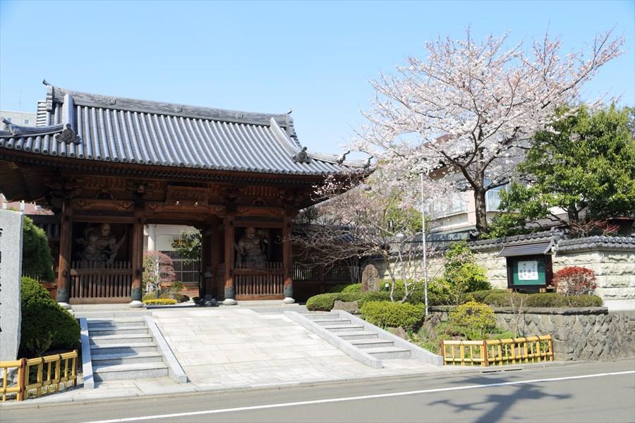 近隣お寺桜と門04