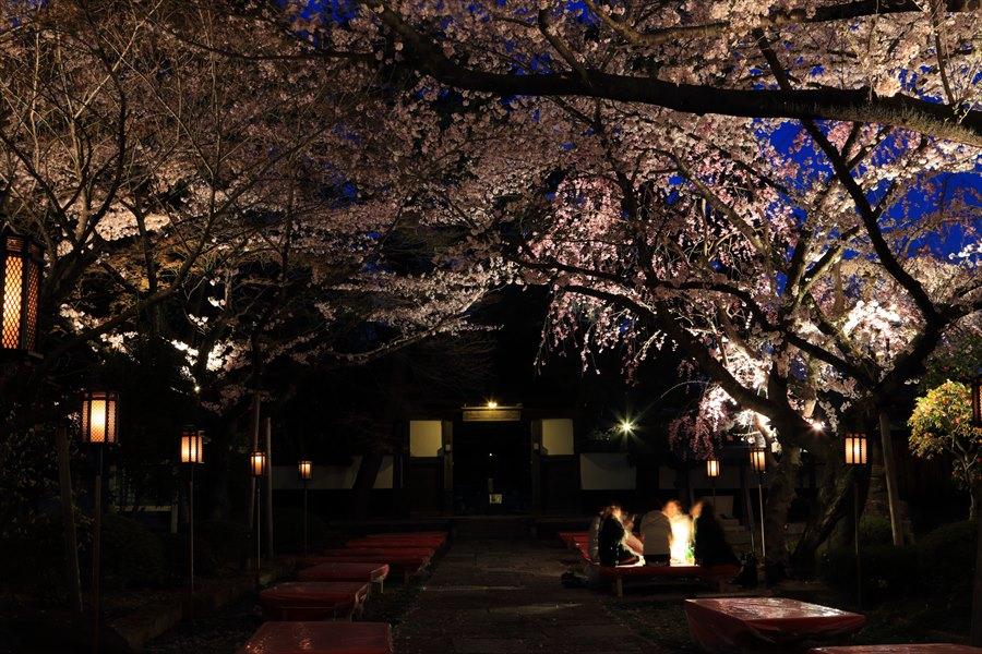 近隣お寺夜桜02