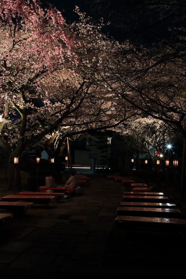 近隣お寺夜桜回廊12
