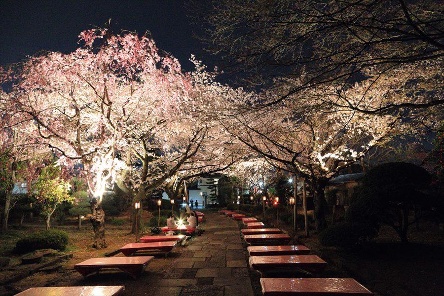 近隣お寺夜桜手持ち16