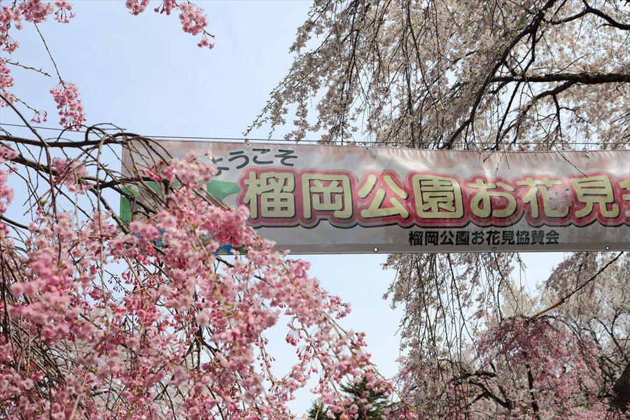 仙台つつじがおか公園花見会場01