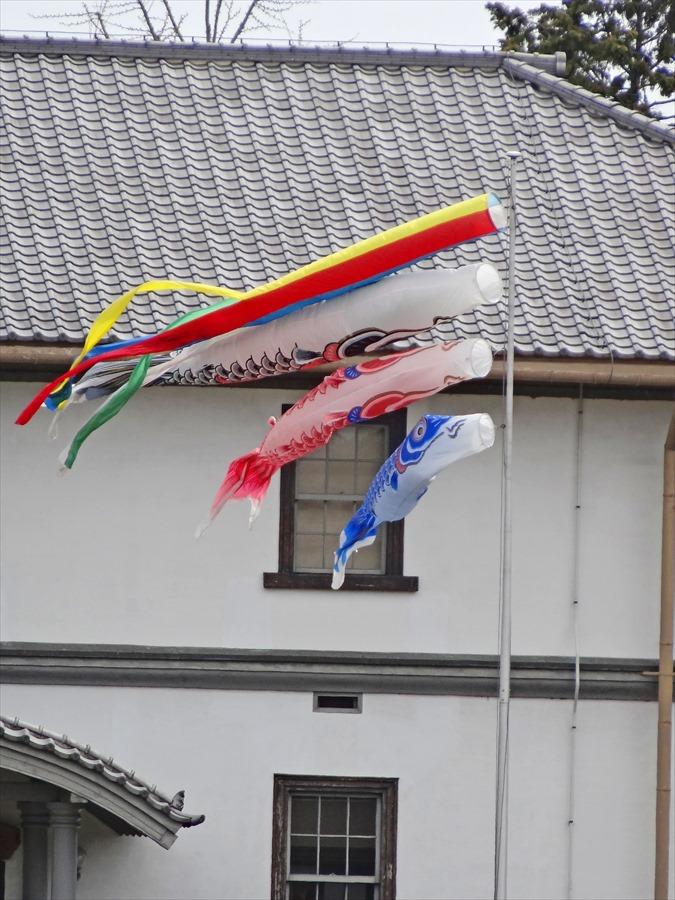 仙台榴岡公園桜その2鯉のぼりHX12