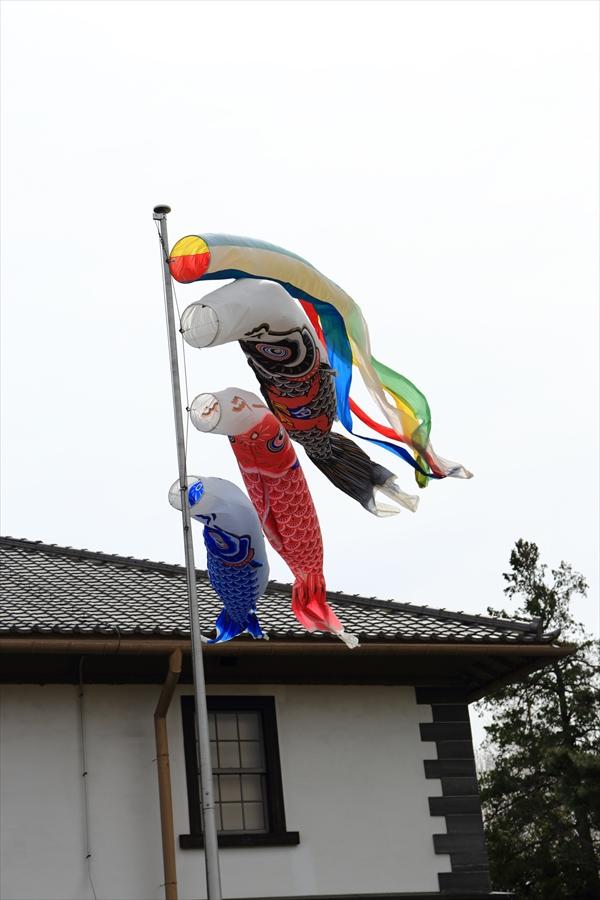 仙台榴岡公園桜その2鯉のぼり11