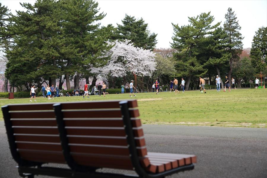仙台榴岡公園桜その2ベンチと桜09