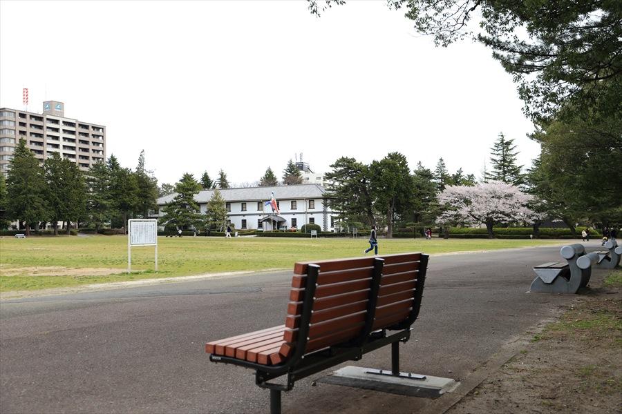 仙台榴岡公園桜その2ベンチと広場10