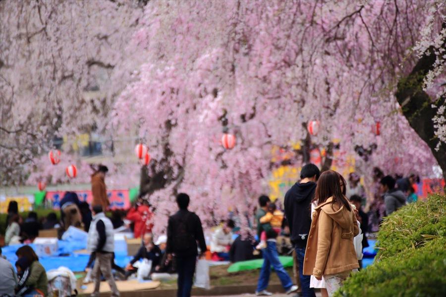 仙台榴岡公園桜その3花見どう楽しむ女性2人02