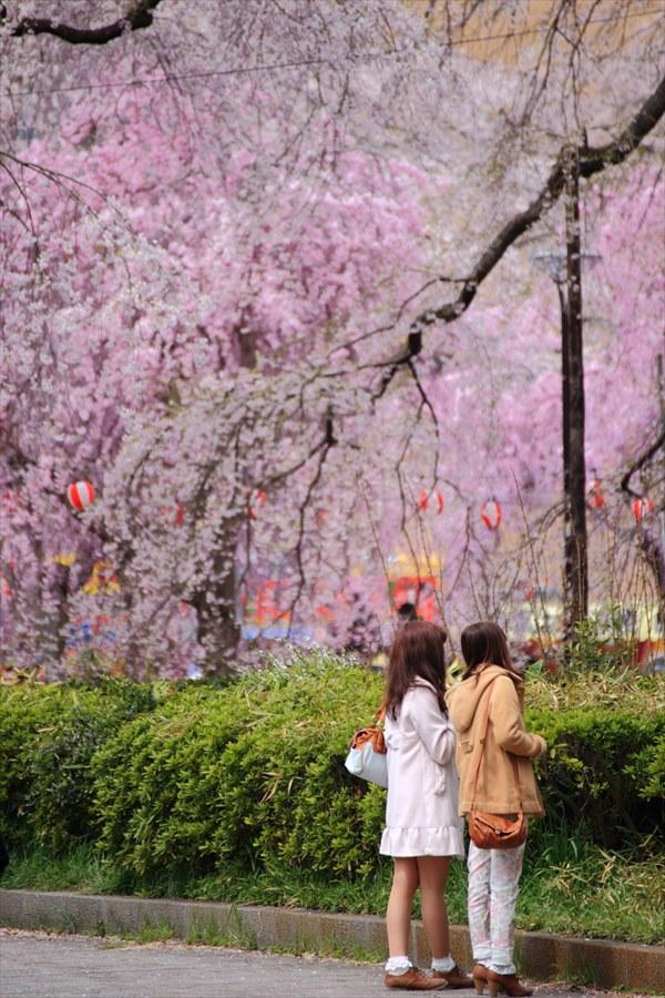 仙台榴岡公園桜その3どこか場所ない女性03