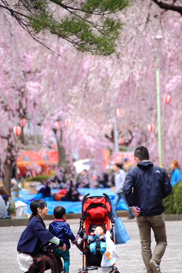 仙台榴岡公園桜その3ファミリー04