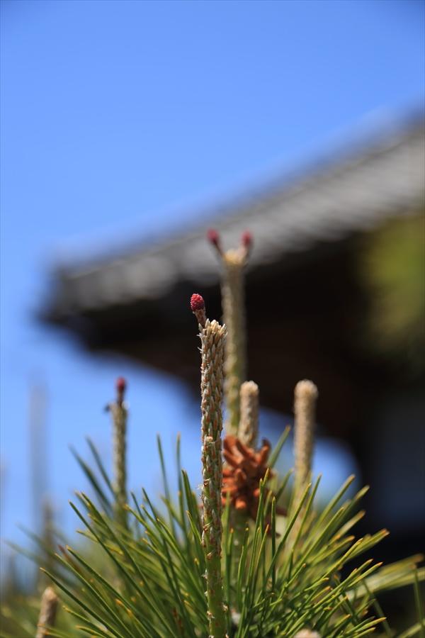 田舎風景松04