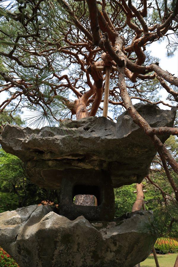新宿日御苑みどり石灯籠と松12
