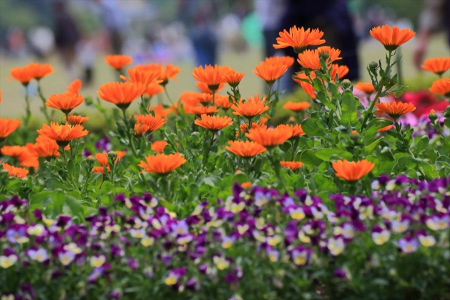 新宿御苑みどり花壇08