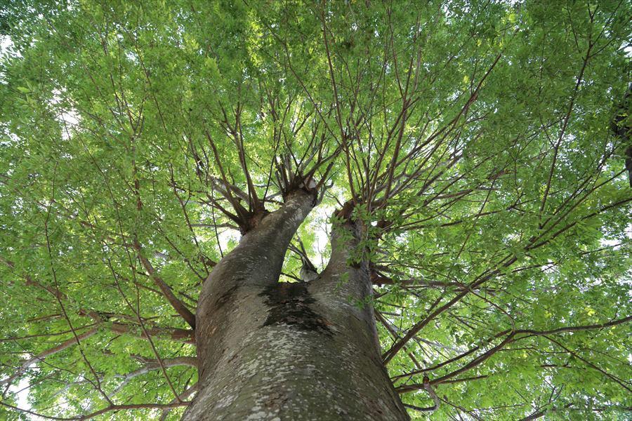 5月自宅木々広々02