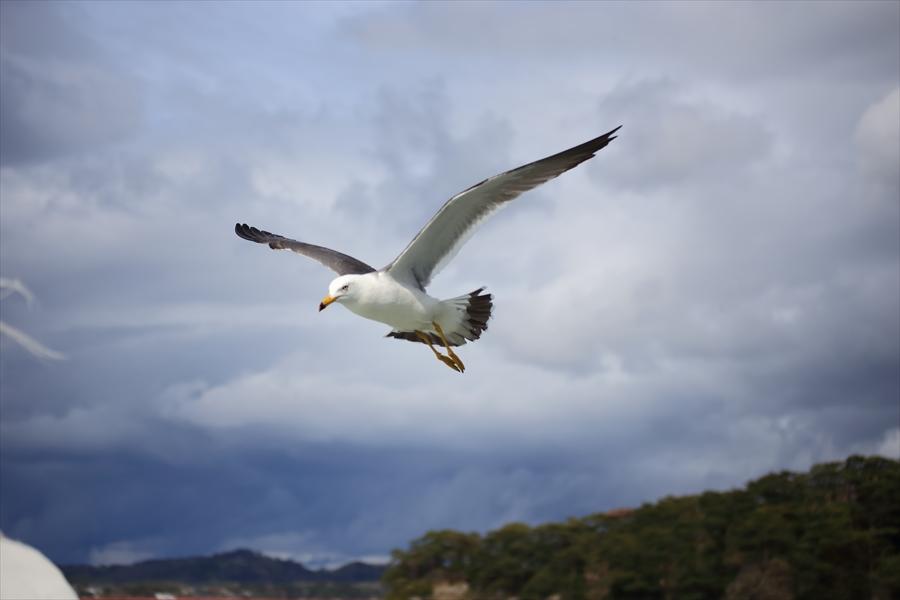 松島海岸かもめその1飛び去るかもめ05