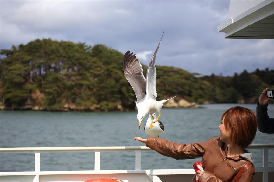 松島海岸かもめその3餌取りかもめ03