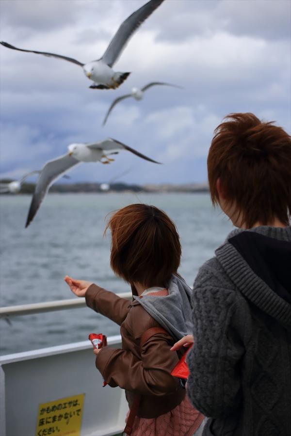 松島海岸かもめその3餌取り07