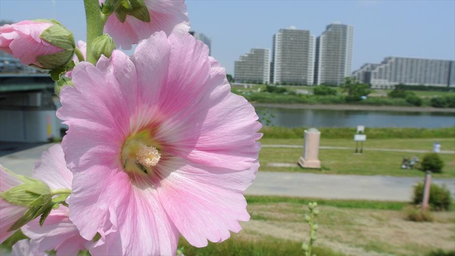 多摩川J1花とマンション09