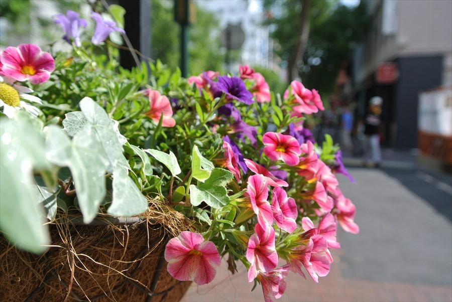 横浜J1154馬車道その2花とストリート11