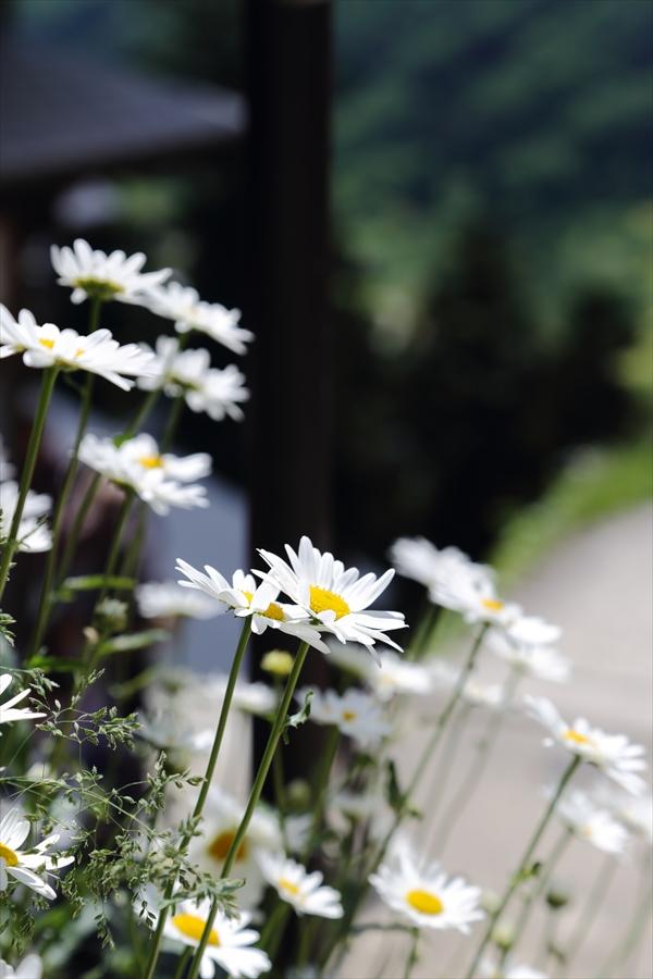 山寺登山道最奥部到着花迎え12