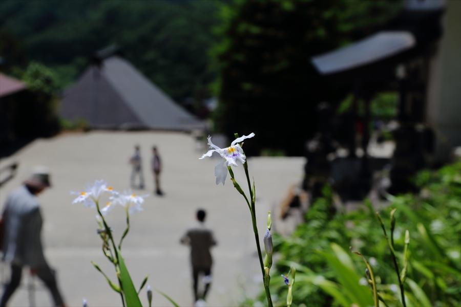 山寺奥の院シャガ越しの景色07