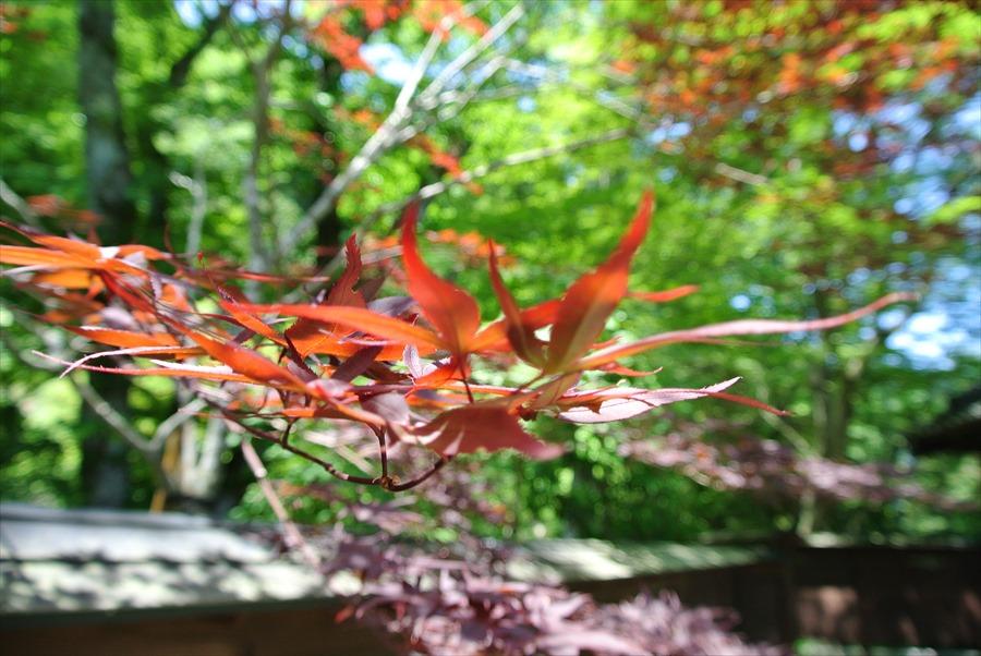 秋保温泉自然かえで01