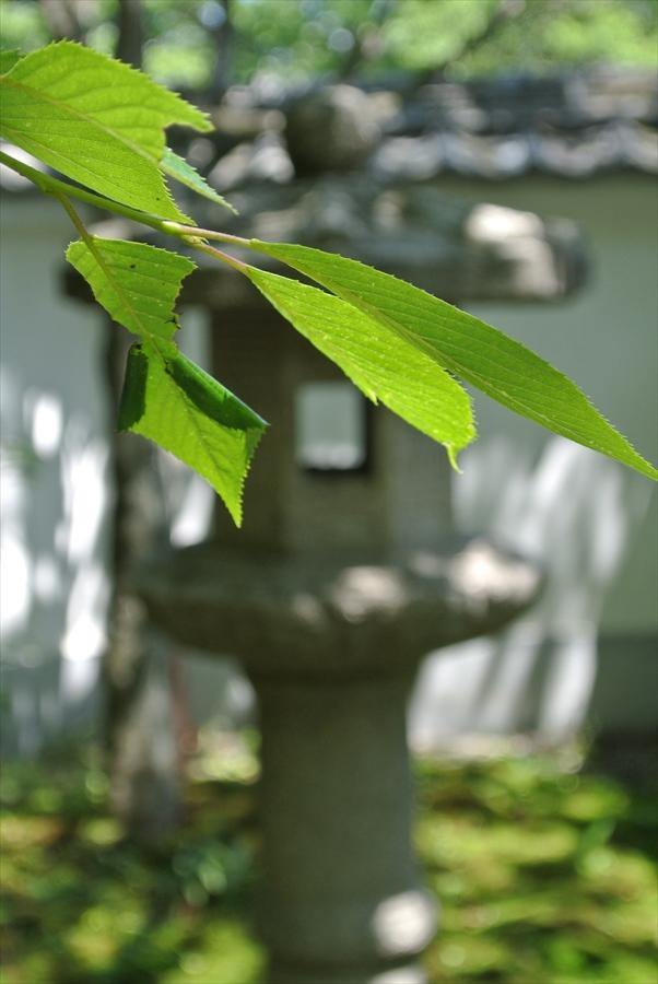 秋保温泉しぜん若葉と灯篭04