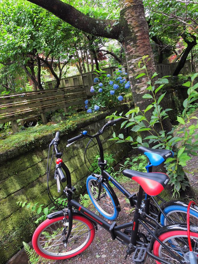 鎌倉紫陽花明月院前瀟洒な自転車と紫陽花03