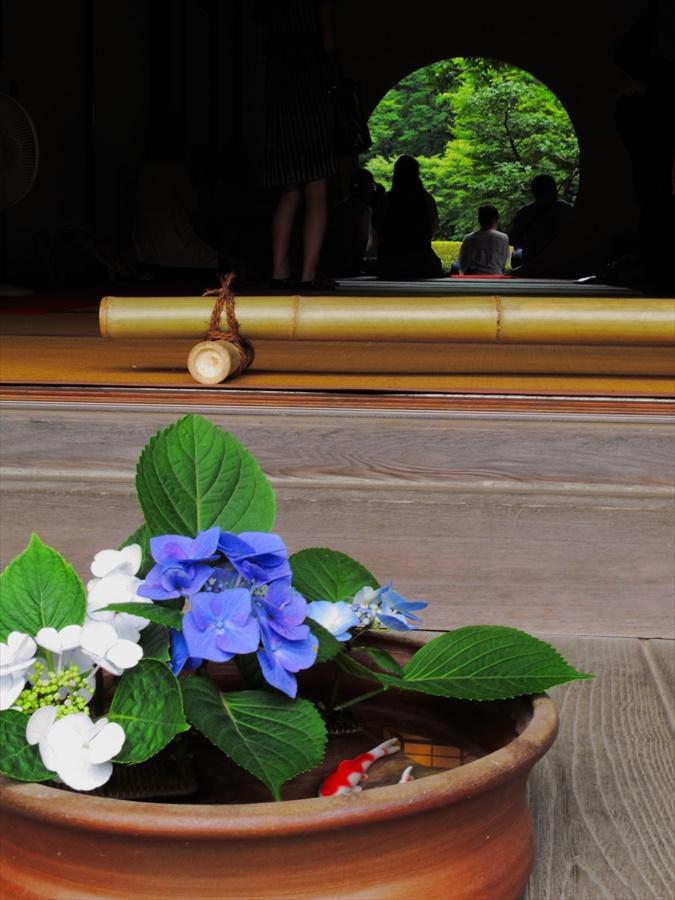 鎌倉紫陽花明月院02丸窓と紫陽花05