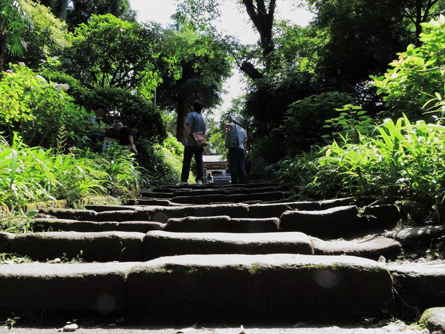 鎌倉紫陽花浄智寺門前から山門への坂02