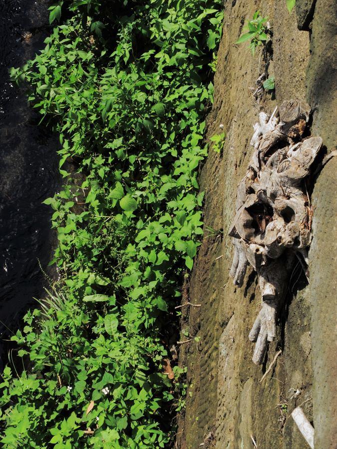 鎌倉紫陽花エピローグ堀に見えた不思議な物03