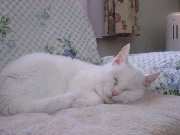 ナツ姫寝顔