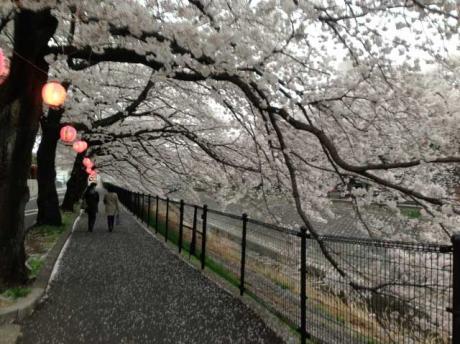 桜2@乞田川