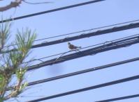H240708名前不明の鳥