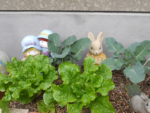 DSCN9542ぼたん菜園