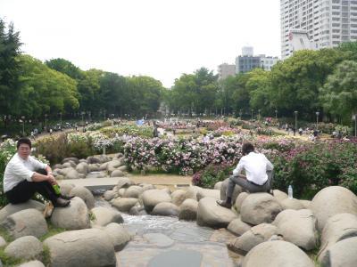 早出をしてバラの美しさを堪能した「靫公園バラ園」の全景