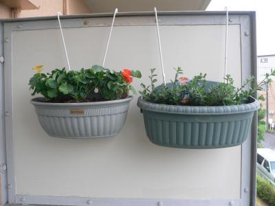 壁掛け式のプランターに植えた「アメリカンブルー」と「ナスタチューム」