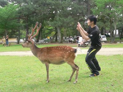 鹿とともに写真撮影をする人間の若者
