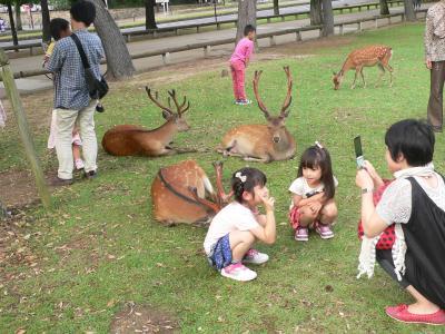 奈良公園で鹿と一緒に写真撮影する人間の親子