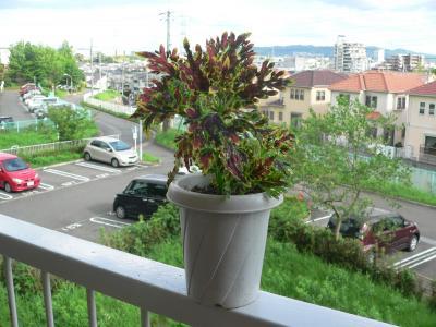 取材で奈良に行った時にお土産でもらってきた「スーパーダックフット」