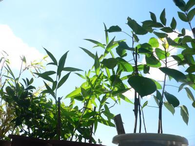 夏の太陽を浴びて逞しく成長する植木たち