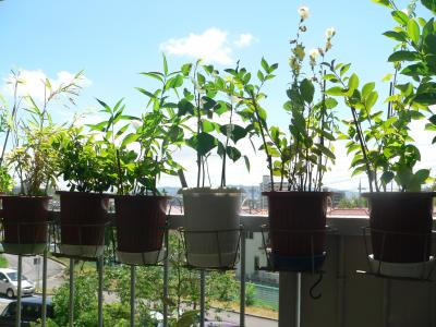 夏の雰囲気を盛り上げてくれるセミの声とベランダの木々