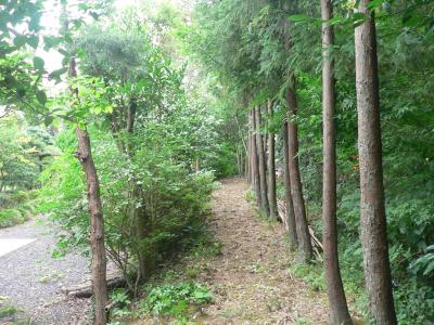 """枝切りを行なった成果によって、明るくなった""""竹薮の道"""""""